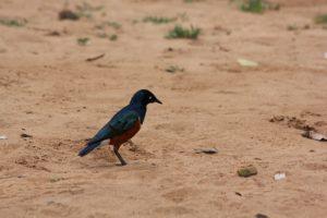 park-birds