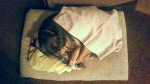 under-blankets